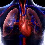 Cardiovascular Diseases that Put You at Risk